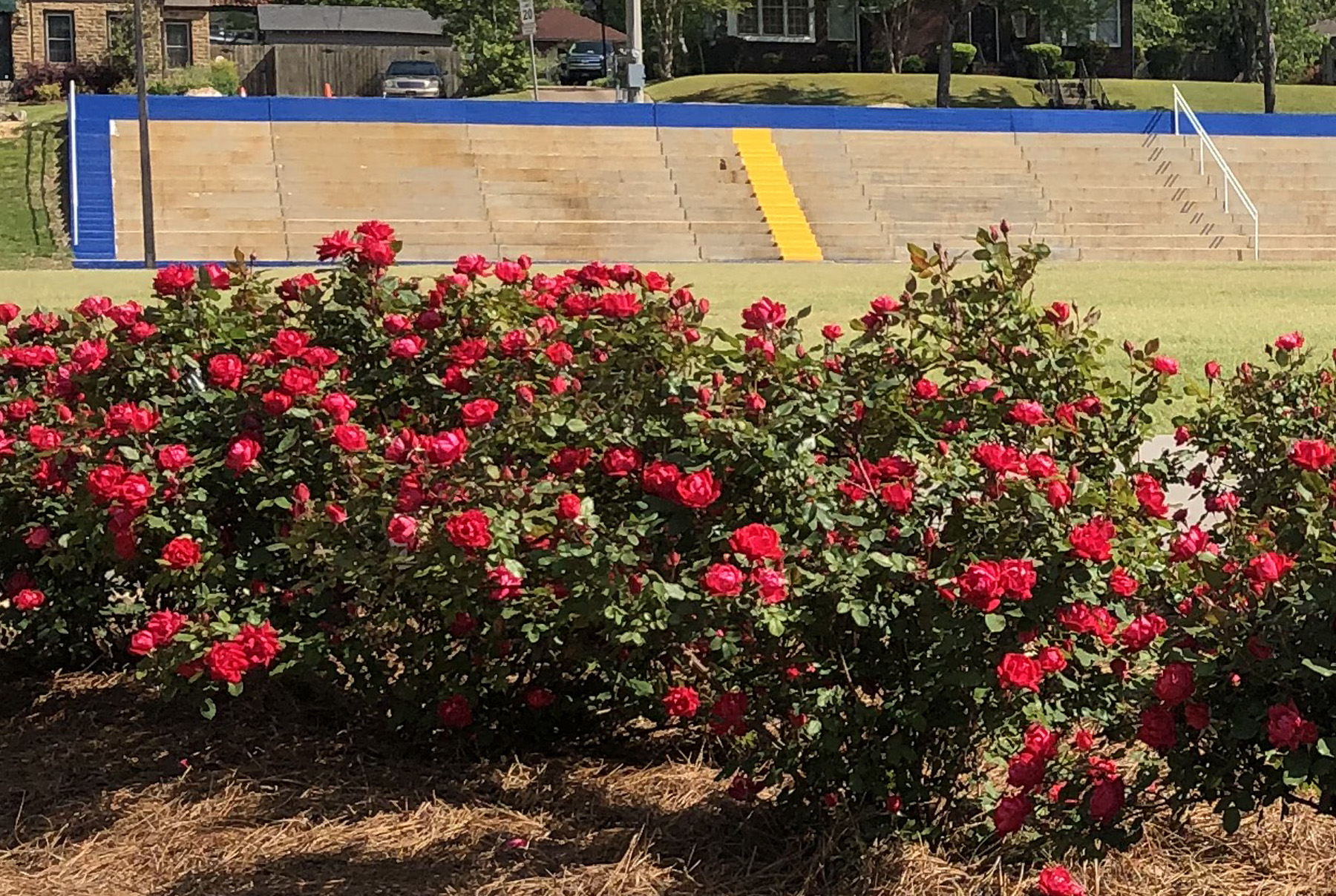 Rose Gardens at Robins Field